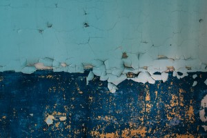 wall food source for mold