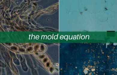 mold equation