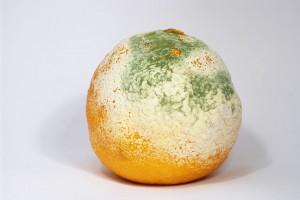 mold growing on clementine