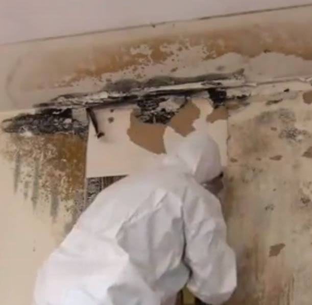 ami environmental mold removal how to safely remediate mold. Black Bedroom Furniture Sets. Home Design Ideas